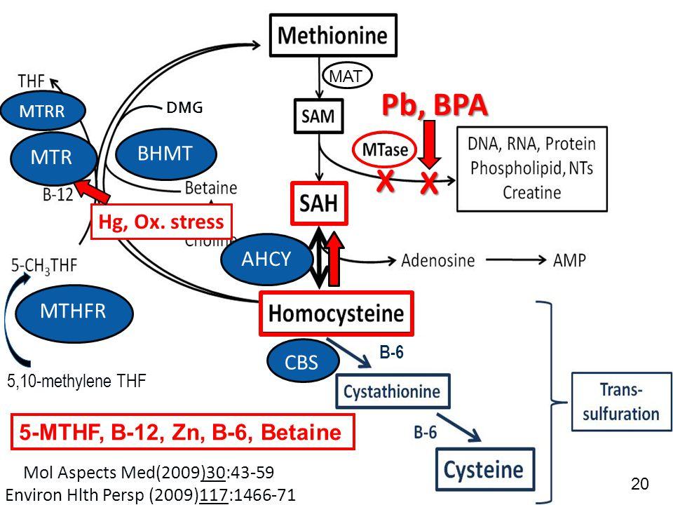 ACAM 6/10/2014 5,10-methylene THF B-6 Hg, Ox.