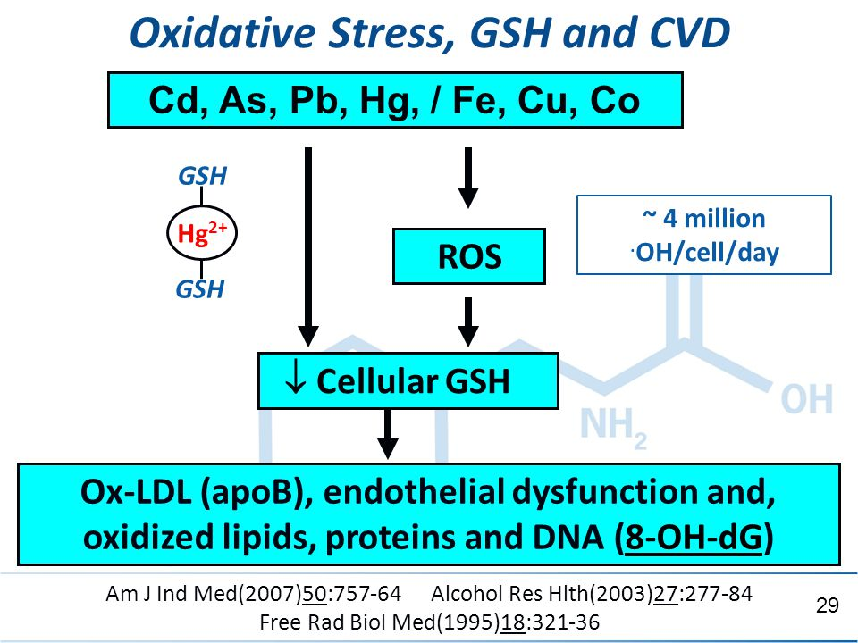 ACAM 6/10/2014 Oxidative Stress, GSH and CVD Ox-LDL (apoB), endothelial dysfunction and, oxidized lipids, proteins and DNA (8-OH-dG)  Cellular GSH Cd