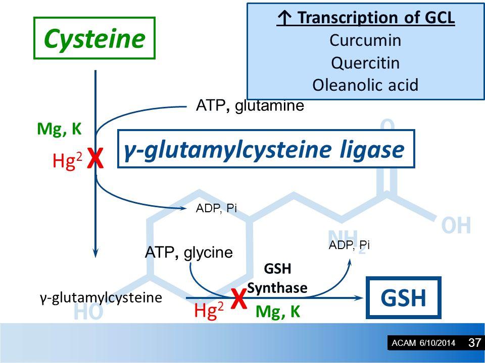 ACAM 6/10/2014 Mg, K γ-glutamylcysteine GSH ATP, glycine ADP, Pi GSH Synthase ATP, glutamine γ-glutamylcysteine ligase ADP, Pi Mg, K Cysteine ↑ Transcription of GCL Curcumin Quercitin Oleanolic acid Hg 2 X 37 X Hg 2