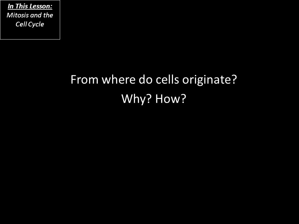 From where do cells originate? Why? How? In This Lesson: Mitosis and the Cell Cycle