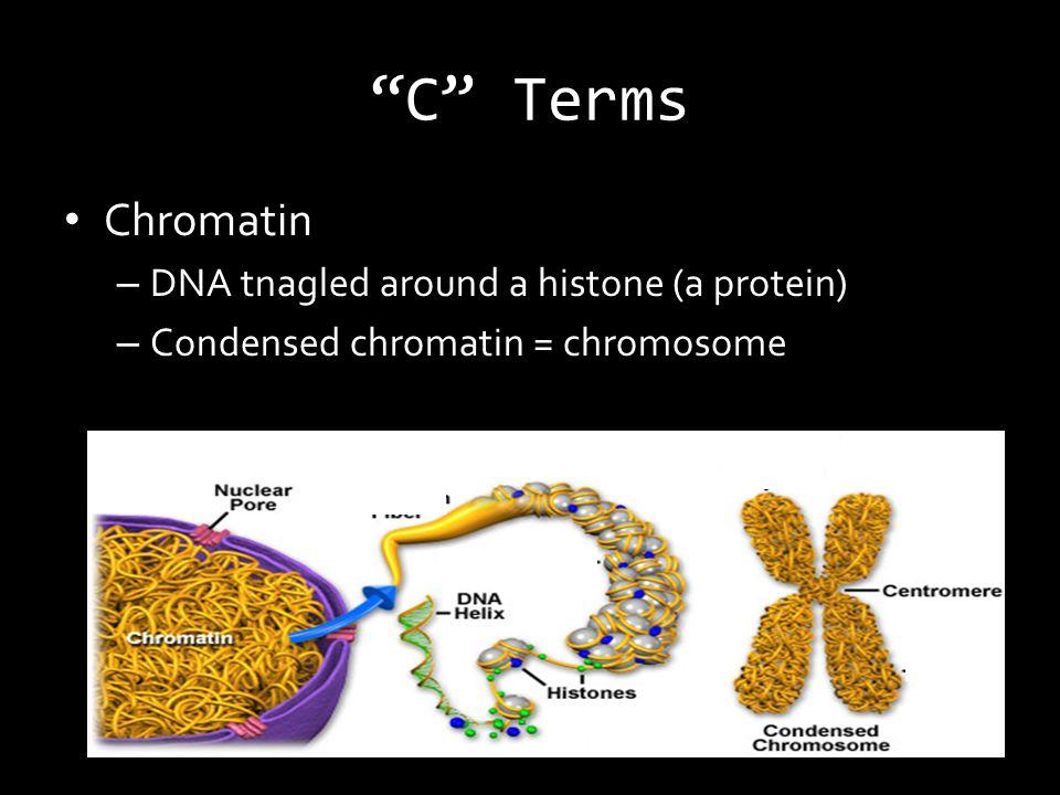 C Terms Chromatin – DNA tnagled around a histone (a protein) – Condensed chromatin = chromosome