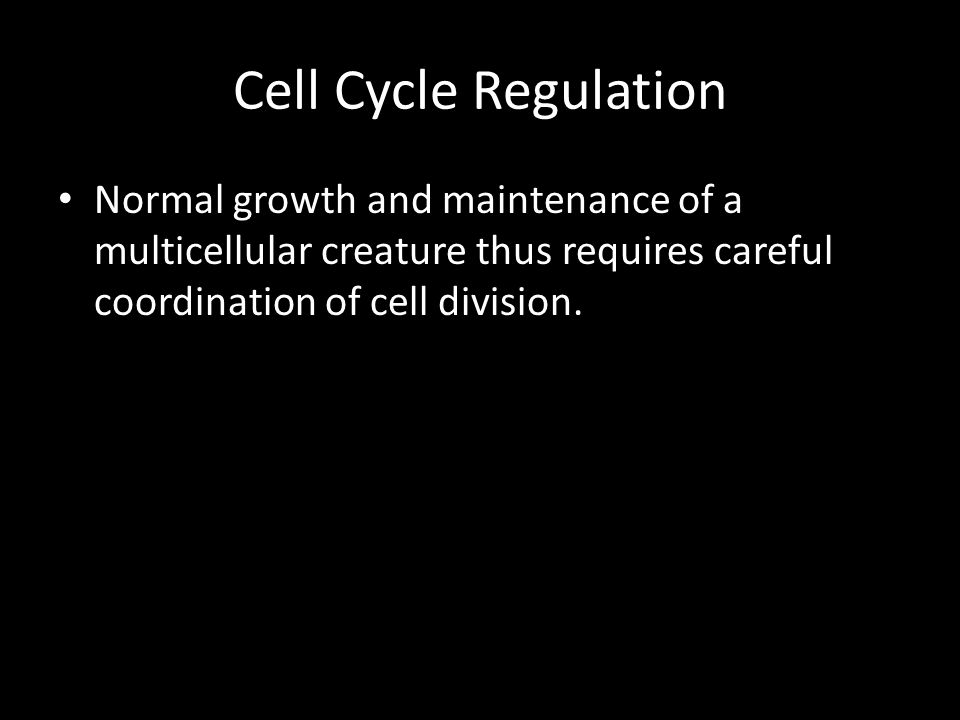 Cell Cycle Regulation Normal growth and maintenance of a multicellular creature thus requires careful coordination of cell division.