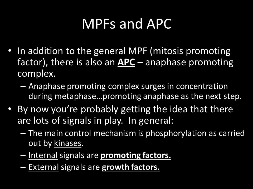 MPFs and APC In addition to the general MPF (mitosis promoting factor), there is also an APC – anaphase promoting complex.