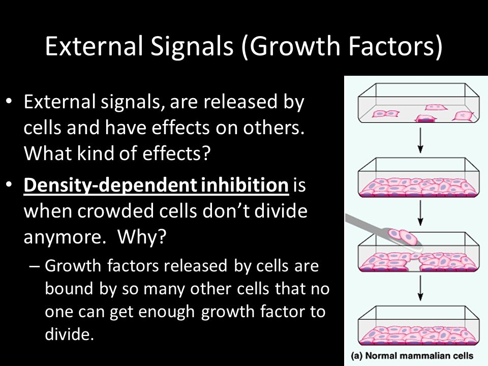 External Signals (Growth Factors) External signals, are released by cells and have effects on others.