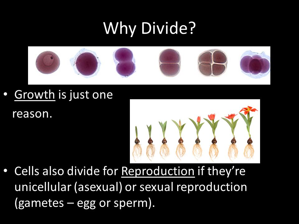 Why Divide.Growth is just one reason.