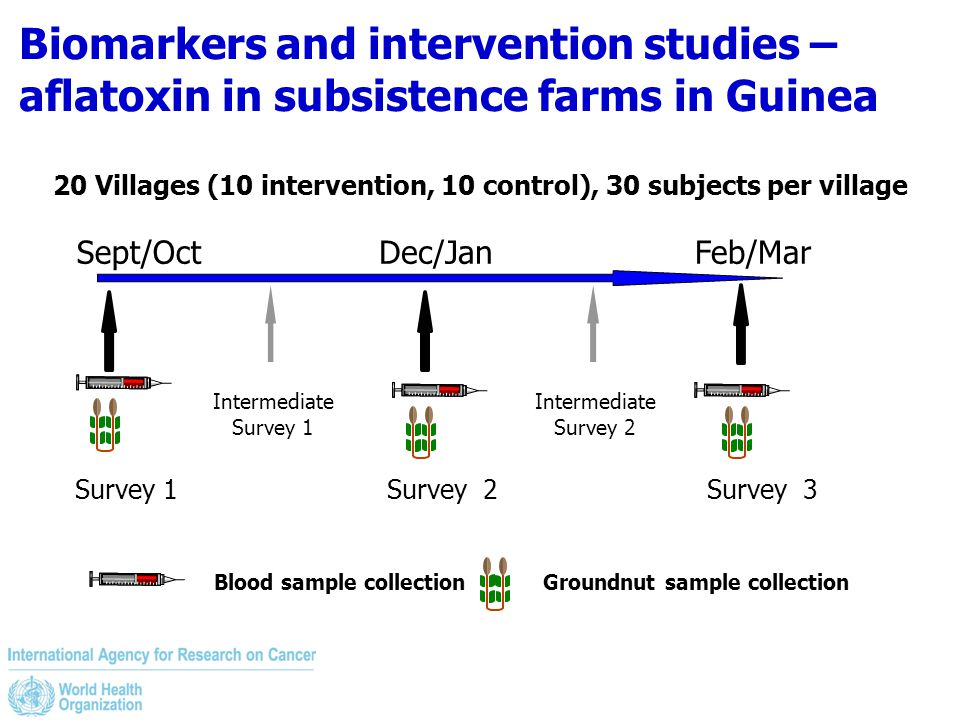 Biomarkers and intervention studies – aflatoxin in subsistence farms in Guinea Sept/OctDec/JanFeb/Mar Survey 1Survey 2Survey 3 20 Villages (10 interve