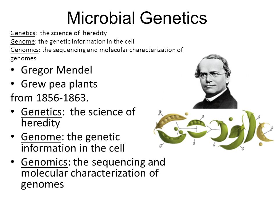 Genetics: the science of heredity Genome: the genetic information in the cell Genomics: the sequencing and molecular characterization of genomes Gregor Mendel Grew pea plants from 1856-1863.