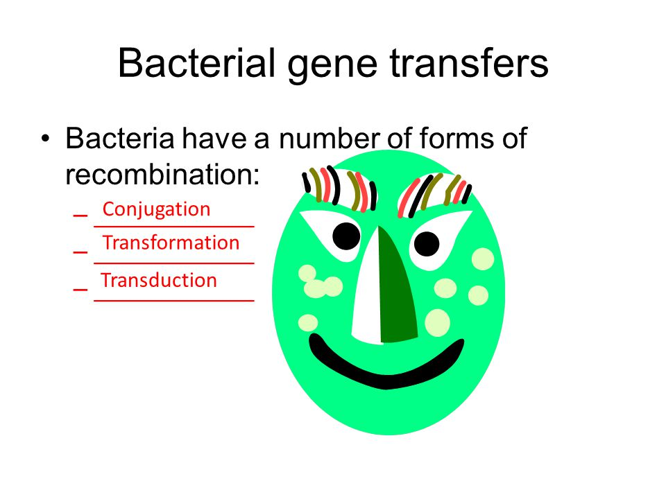 Bacterial gene transfers Bacteria have a number of forms of recombination: –___________ Conjugation Transformation Transduction