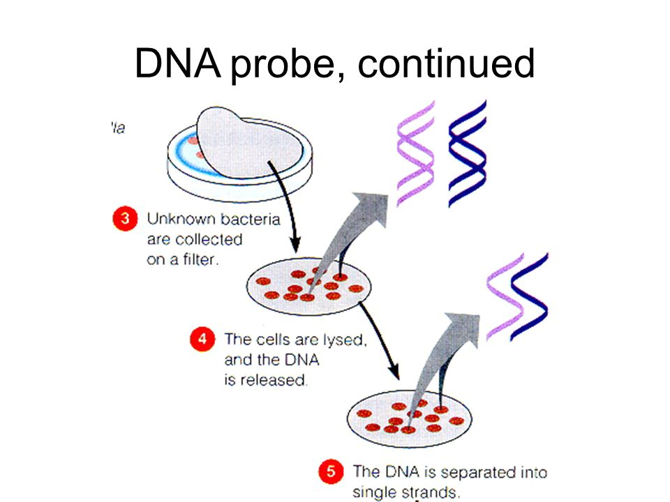 DNA probe, continued