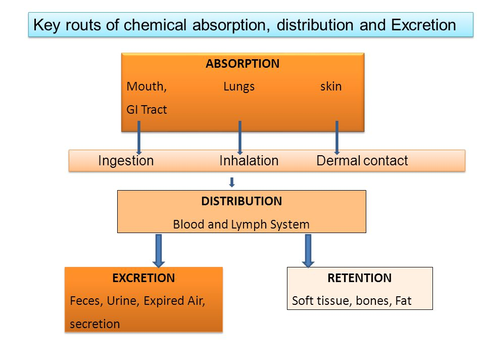 ABSORPTION Mouth, Lungs skin GI Tract ABSORPTION Mouth, Lungs skin GI Tract DISTRIBUTION Blood and Lymph System EXCRETION Feces, Urine, Expired Air, secretion EXCRETION Feces, Urine, Expired Air, secretion RETENTION Soft tissue, bones, Fat Ingestion Inhalation Dermal contact Key routs of chemical absorption, distribution and Excretion