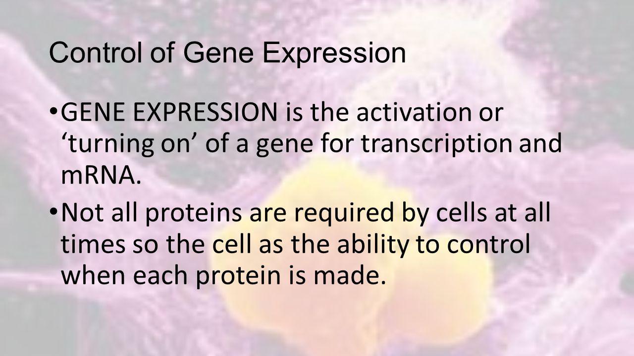 Gene Expression in Prokaryotes E.