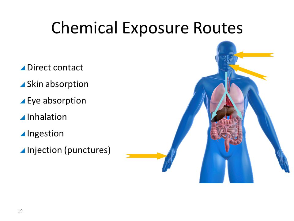  Direct contact  Skin absorption  Eye absorption  Inhalation  Ingestion  Injection (punctures) Chemical Exposure Routes 19