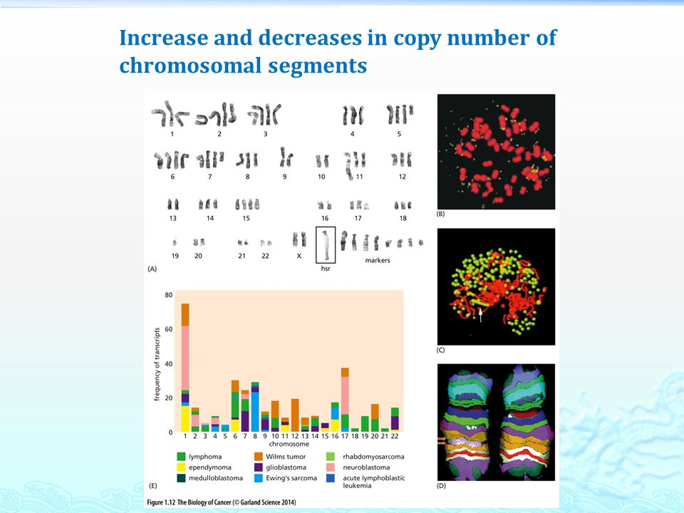 Increase and decreases in copy number of chromosomal segments