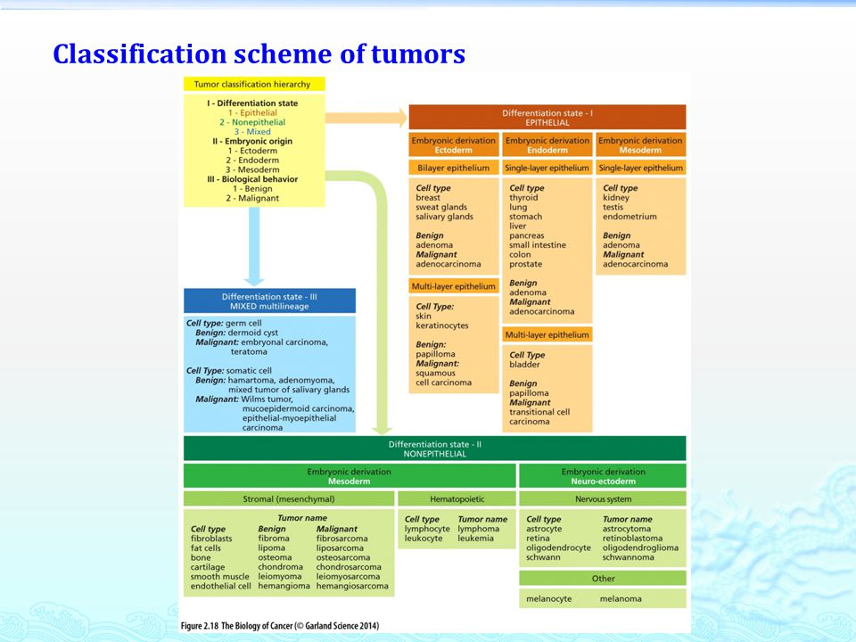 Classification scheme of tumors