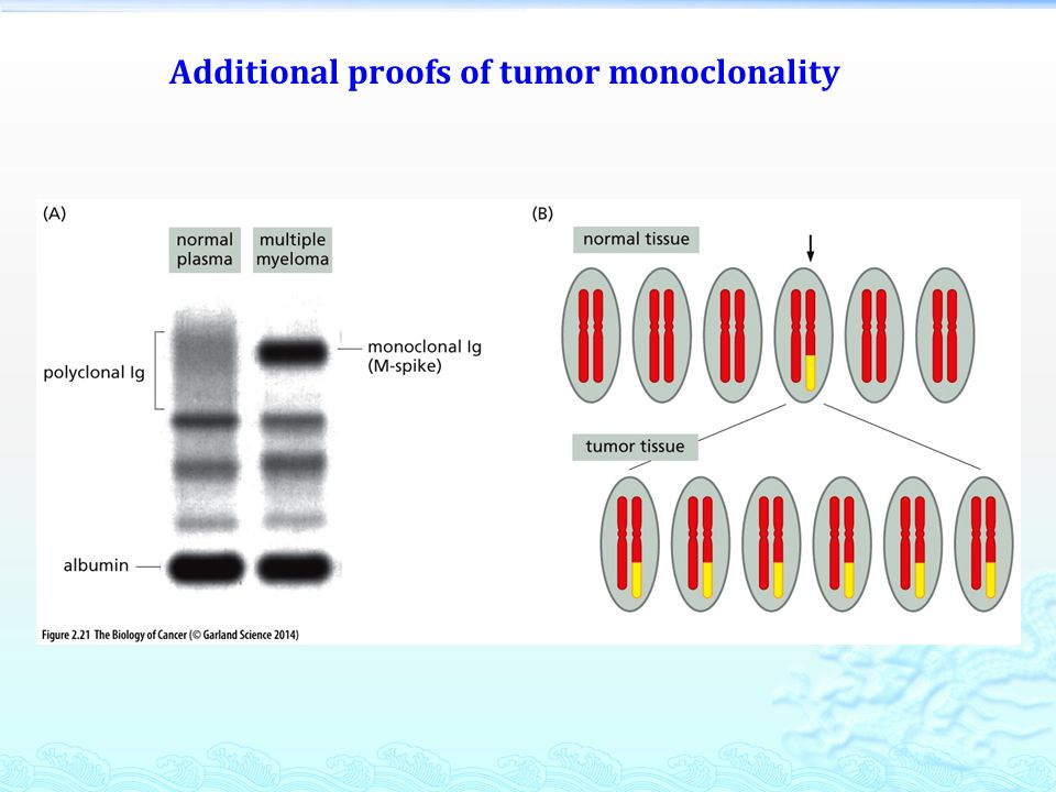 Additional proofs of tumor monoclonality