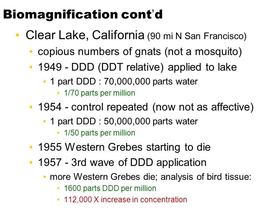 Biomagnification cont'd Clear Lake, California (90 mi N San Francisco) copious numbers of gnats (not a mosquito) 1949 - DDD (DDT relative) applied to