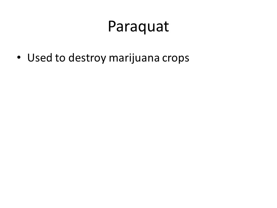Paraquat Used to destroy marijuana crops