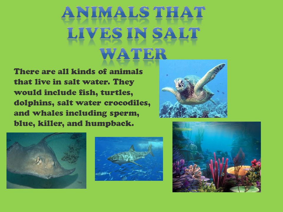 There are all kinds of animals that live in salt water.