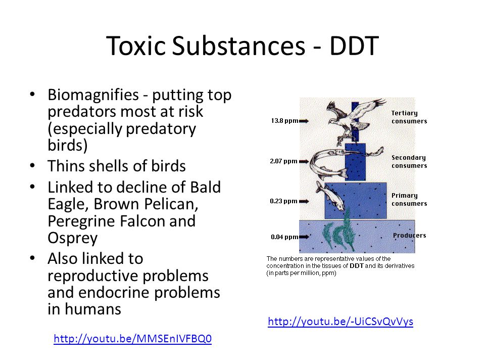 Toxic Substances - DDT Biomagnifies - putting top predators most at risk (especially predatory birds) Thins shells of birds Linked to decline of Bald Eagle, Brown Pelican, Peregrine Falcon and Osprey Also linked to reproductive problems and endocrine problems in humans http://youtu.be/-UiCSvQvVys http://youtu.be/MMSEnIVFBQ0