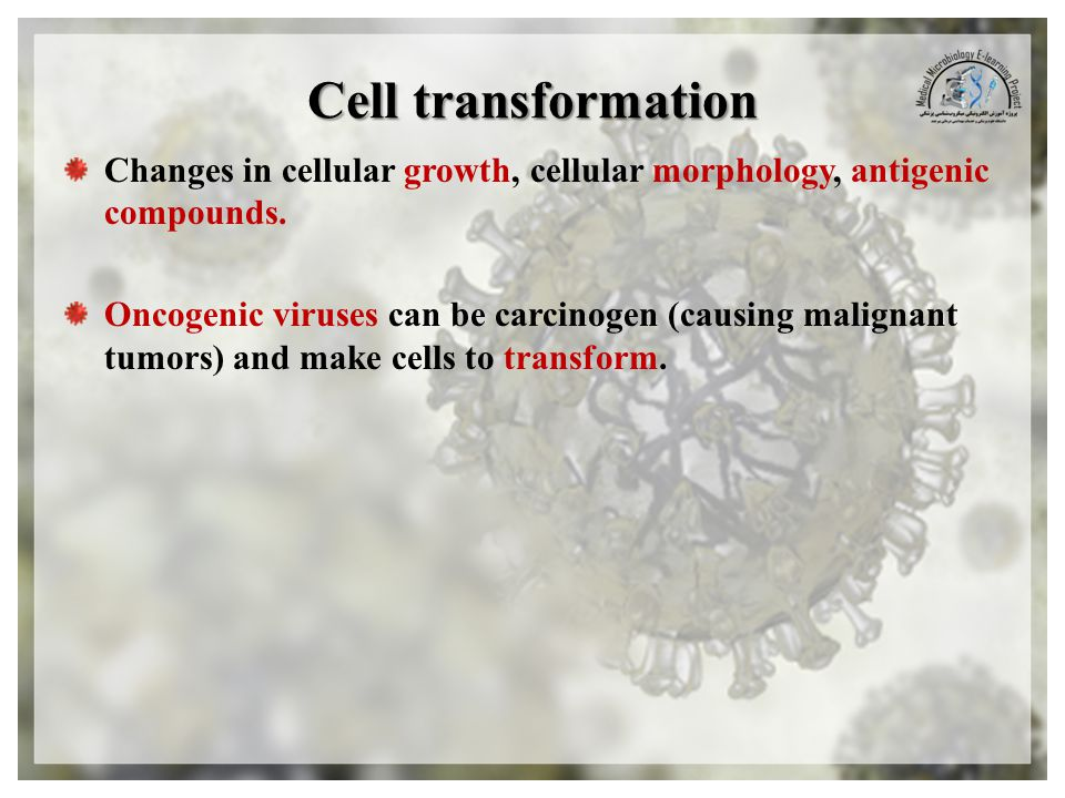 Cell transformation Changes in cellular growth, cellular morphology, antigenic compounds.