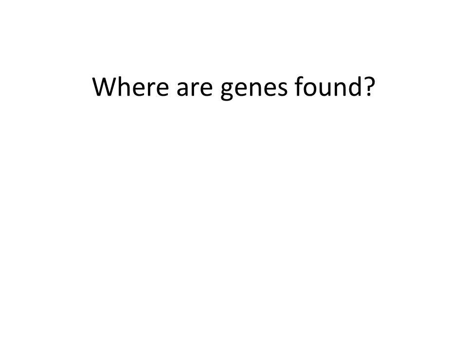Where are genes found?