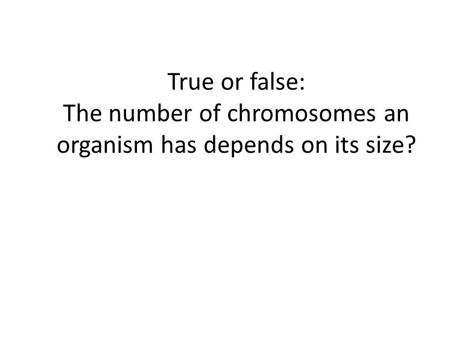 True or false: The number of chromosomes an organism has depends on its size