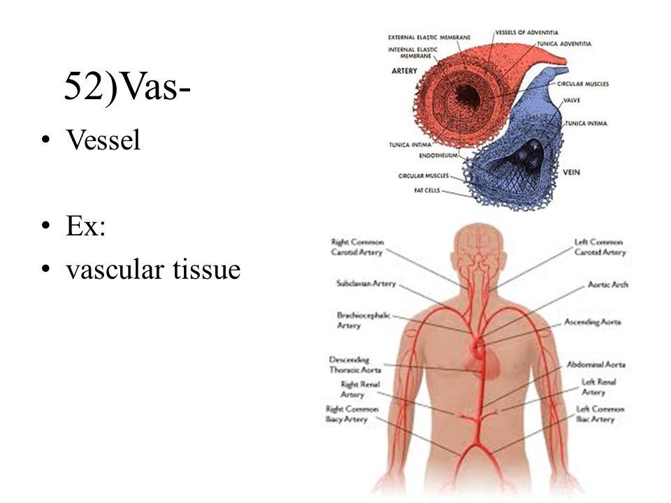 Vessel Ex: vascular tissue 52)Vas-