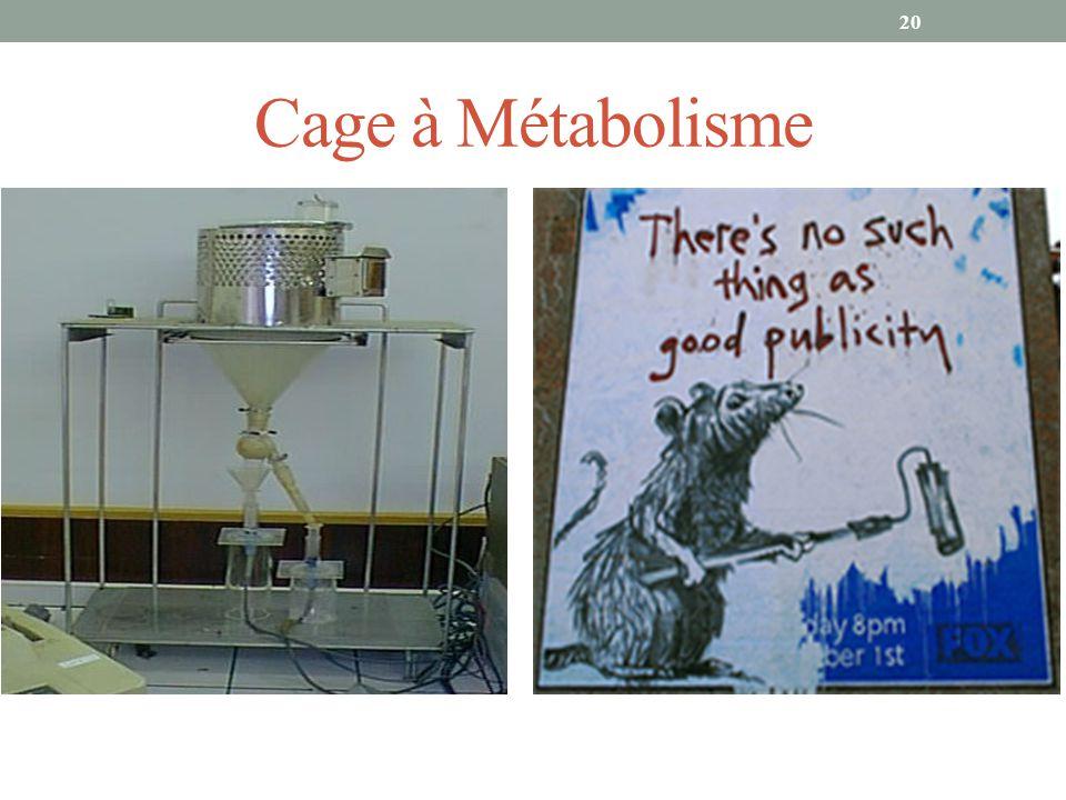 Cage à Métabolisme 20