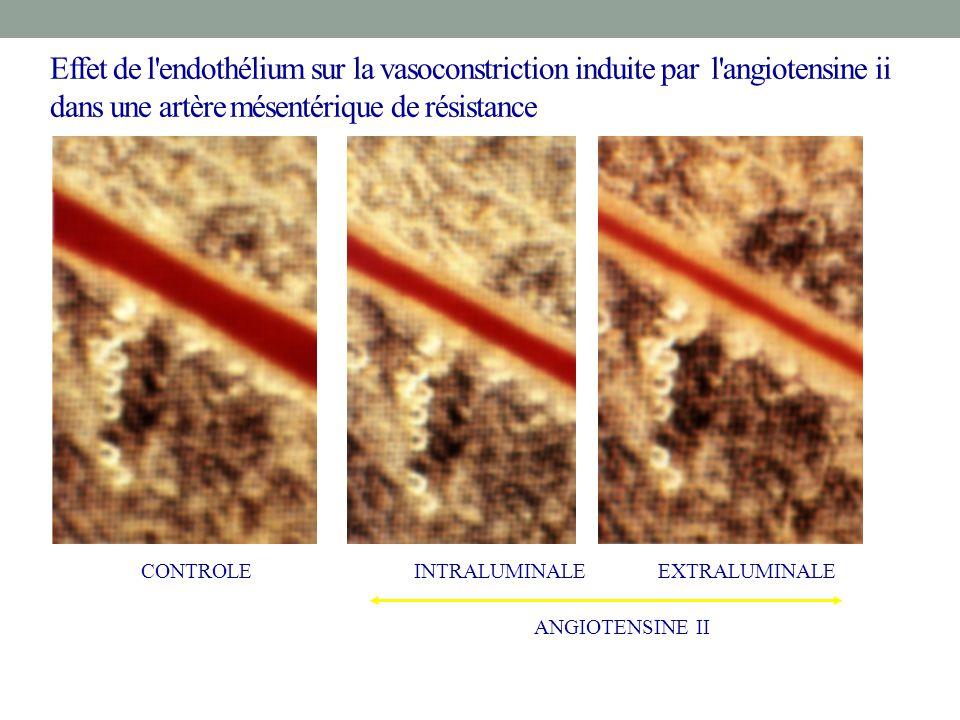 CONTROLEINTRALUMINALEEXTRALUMINALE ANGIOTENSINE II Effet de l'endothélium sur la vasoconstriction induite par l'angiotensine ii dans une artère mésent