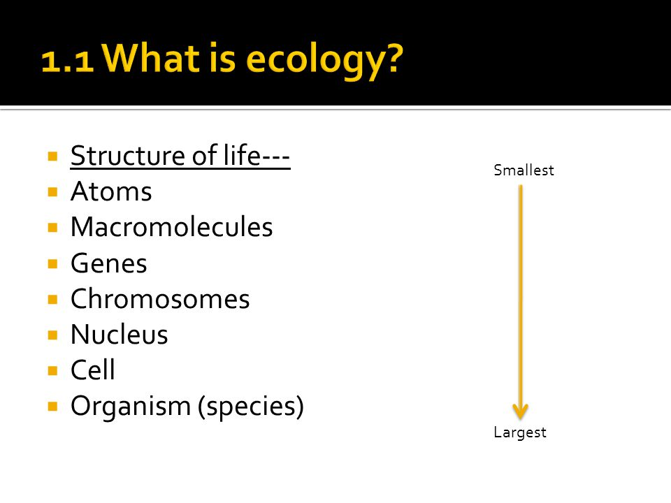  Structure of life---  Atoms  Macromolecules  Genes  Chromosomes  Nucleus  Cell  Organism (species) Smallest Largest