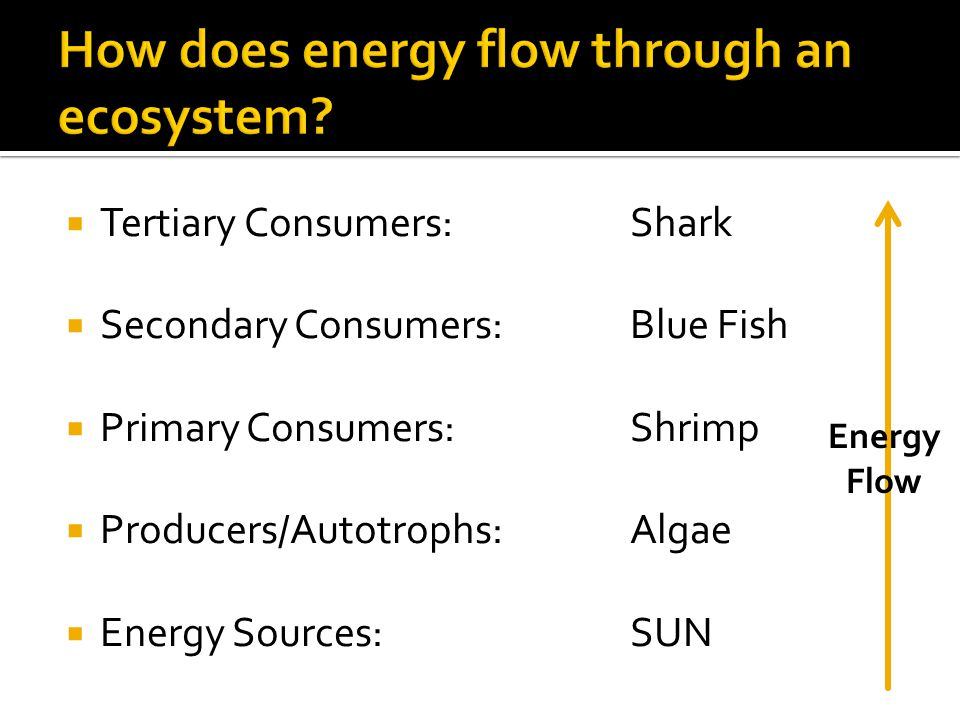  Tertiary Consumers:Shark  Secondary Consumers:Blue Fish  Primary Consumers:Shrimp  Producers/Autotrophs:Algae  Energy Sources:SUN Energy Flow