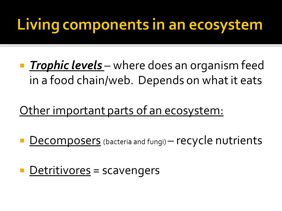  Trophic levels – where does an organism feed in a food chain/web.