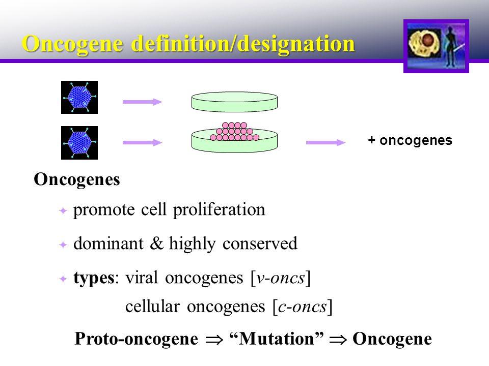 Oncogene definition/designation + oncogenes Oncogenes  promote cell proliferation  dominant & highly conserved  types: viral oncogenes [v-oncs] cellular oncogenes [c-oncs] Proto-oncogene  Mutation  Oncogene