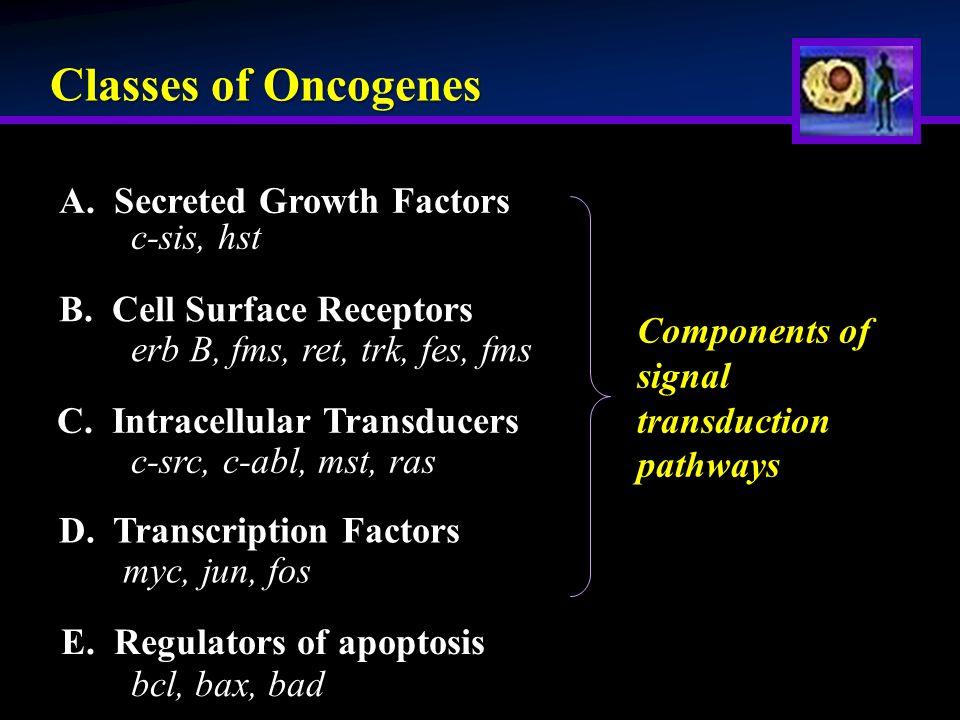 Classes of Oncogenes A. Secreted Growth Factors B.