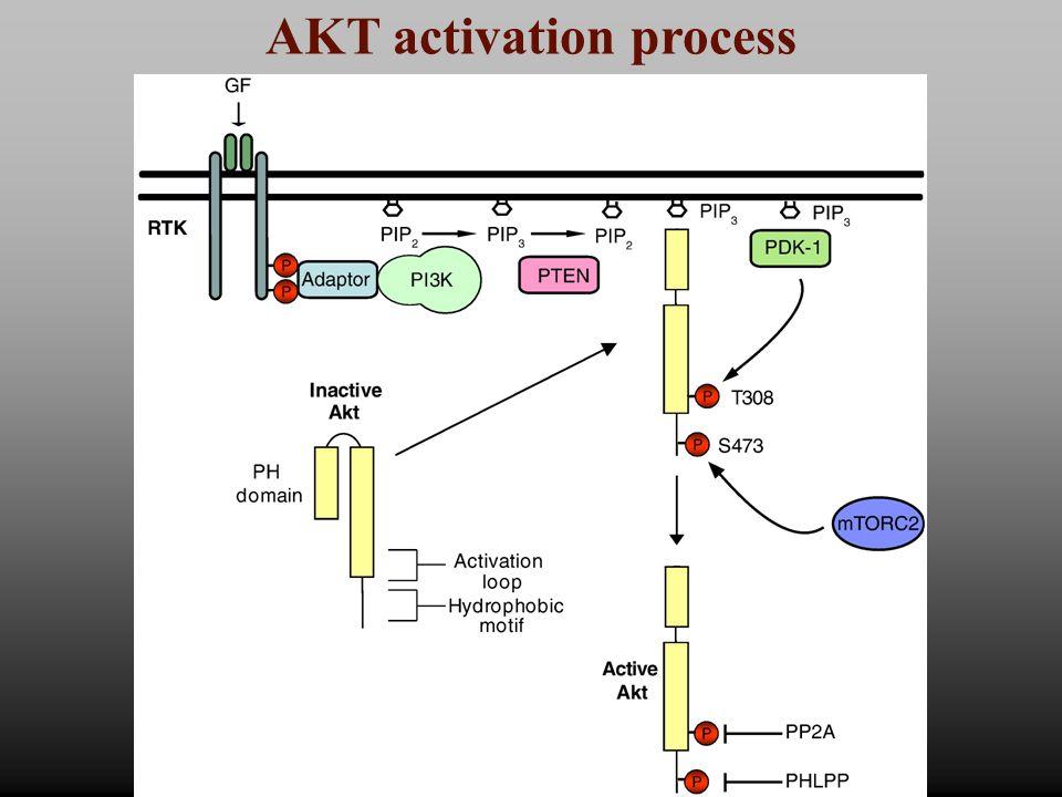 AKT activation process