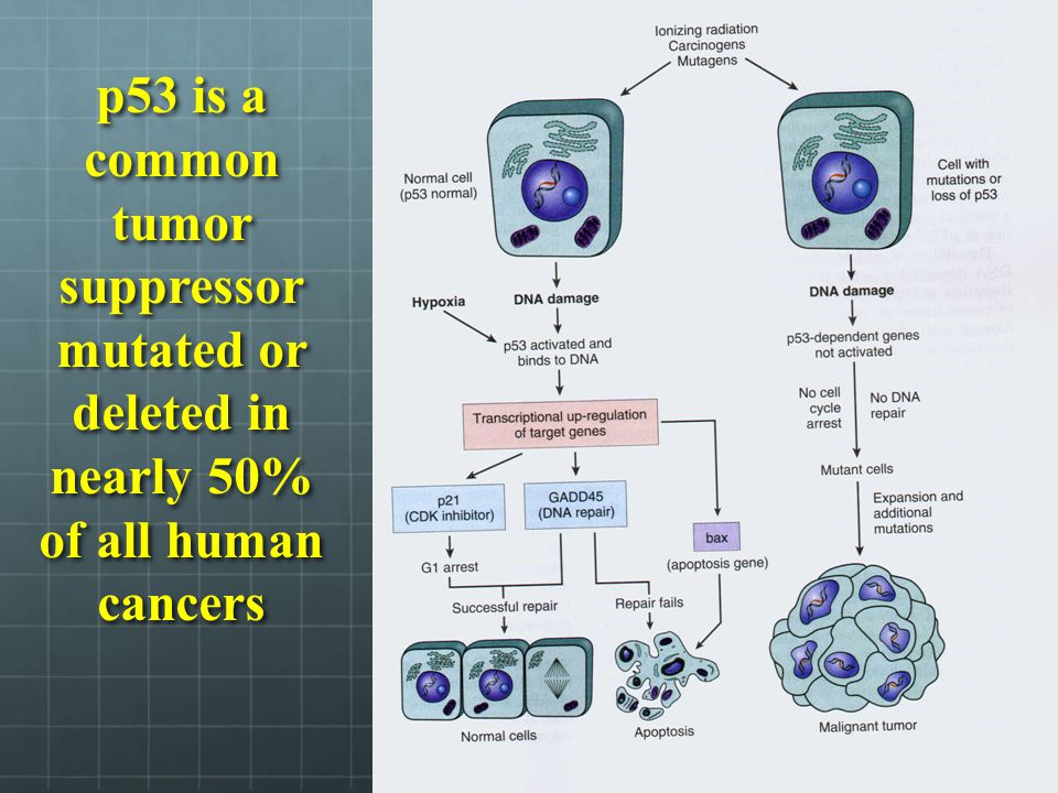 Common traits of cancer cells Modified intercellular and intracellular signaling processes Increased proliferation rates Increased mobility of cells Increased invasive capabilities and ability to metastasize Ability to evade the immune system