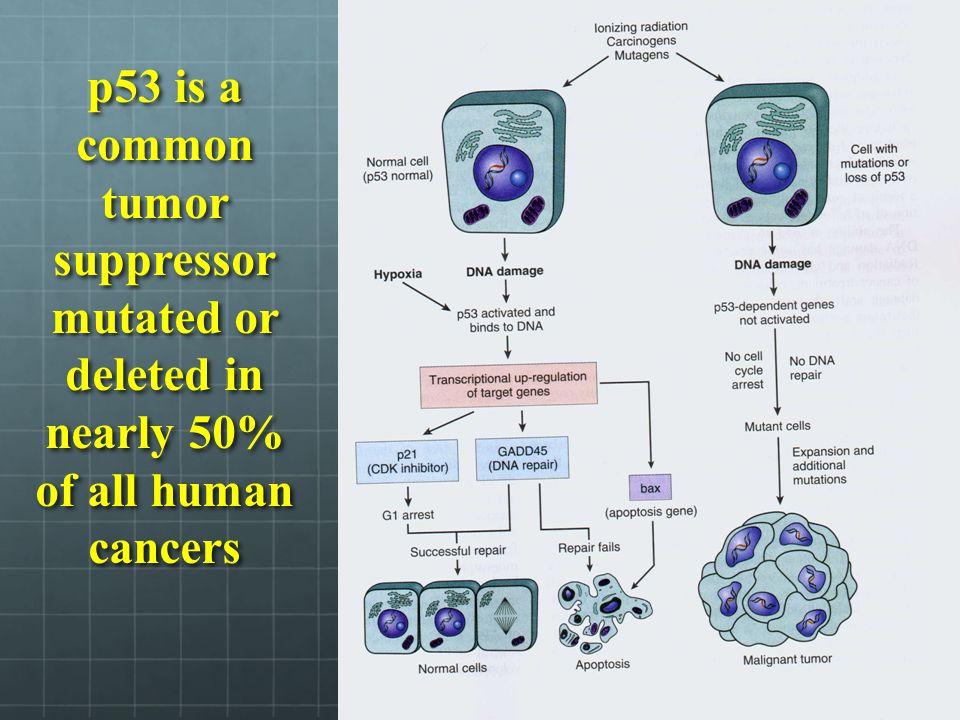 Complex interplay between ligands, receptors and intracellular signaling pathways coordinate the function of HER GF receptors