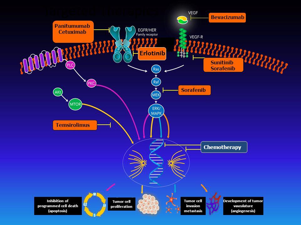 Targeted Therapies Erlotinib Bevacizumab Sunitinib Sorafenib Chemotherapy Panitumumab Cetuximab Temsirolimus Inhibition of programmed cell death (apoptosis) Tumor cell proliferation Tumor cell invasion metastasis Development of tumor vasculature (angiogenesis)