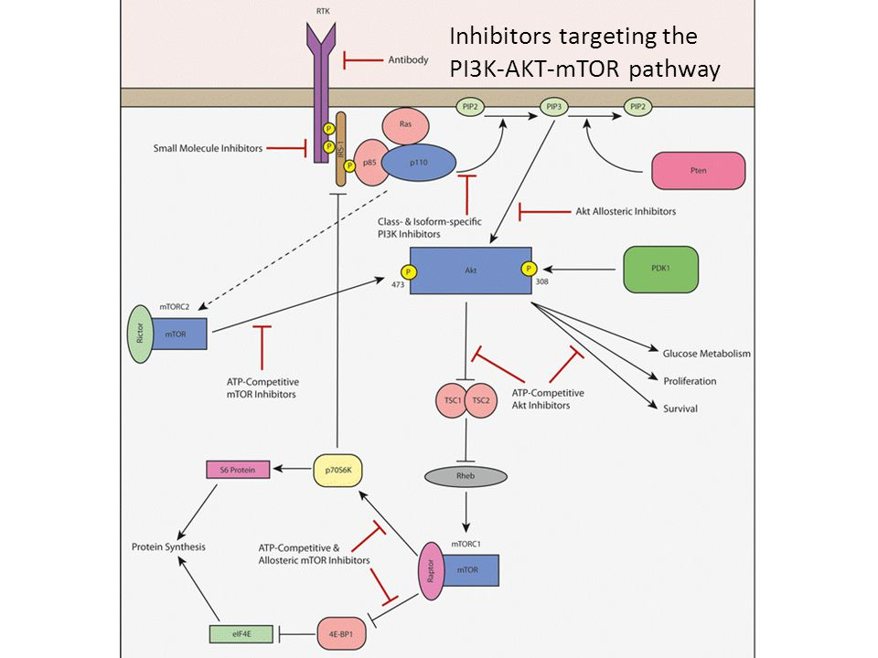 Inhibitors targeting the PI3K-AKT-mTOR pathway