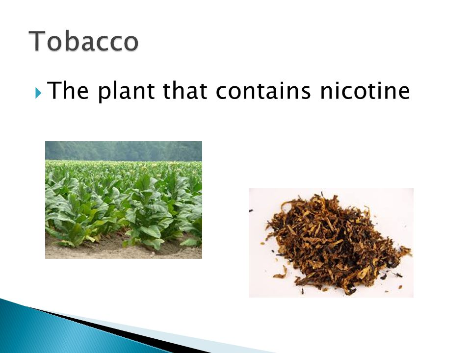  The plant that contains nicotine
