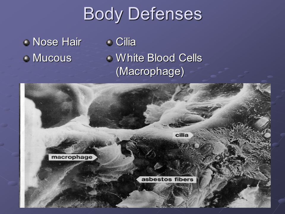 9 Body Defenses Nose Hair MucousCilia White Blood Cells (Macrophage)
