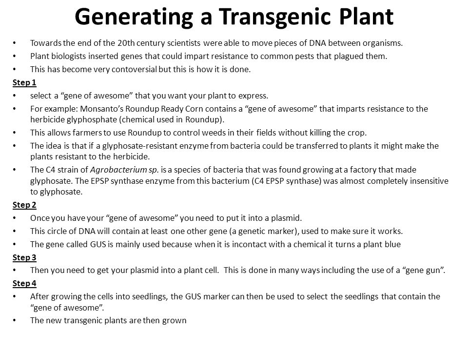 Generating a Transgenic Plant Towards the end of the 20th century scientists were able to move pieces of DNA between organisms.
