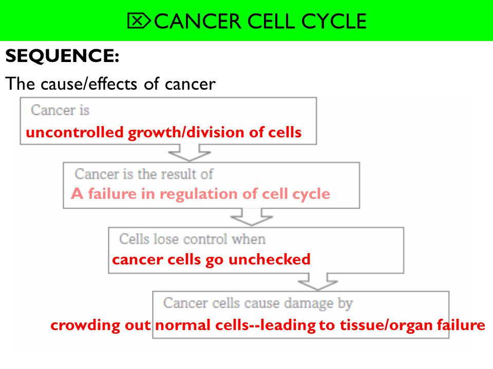 SUMMARIZE: How cells regulate the cell cycle. -Cells use _______________ and _______________ to control the cell cycle. -Different combinations of ___