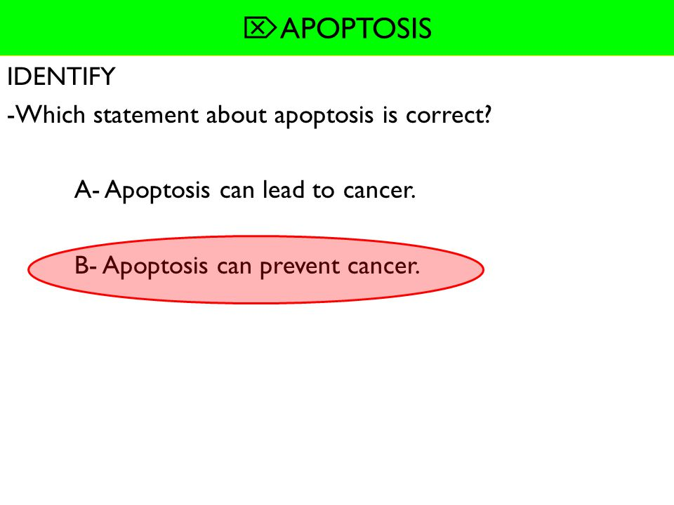  APOPTOSIS SUMMARIZE: Information about apoptosis- APOPTOSIS IS- -process of programmed cell death Organisms use apoptosis to- -destroy cells that ar