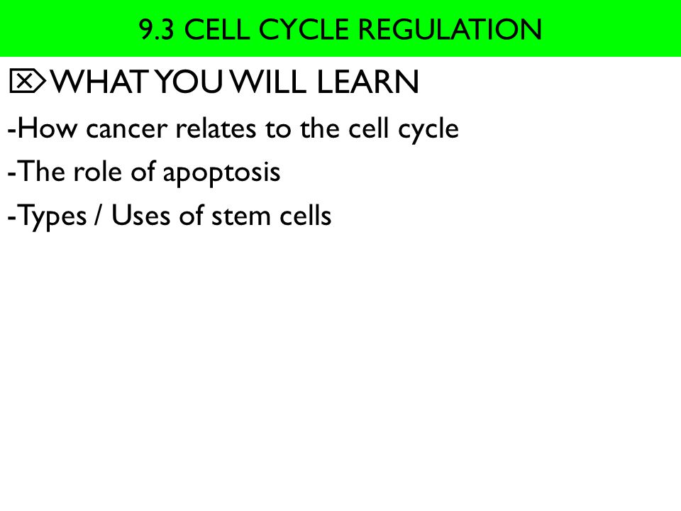 9.3 MAIN IDEA  Normal cell cycle is regulated by cyclin proteins