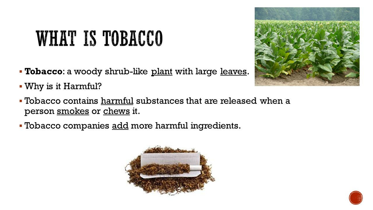  There are more than 4,000 chemicals in tobacco. Many of which are carcinogens.