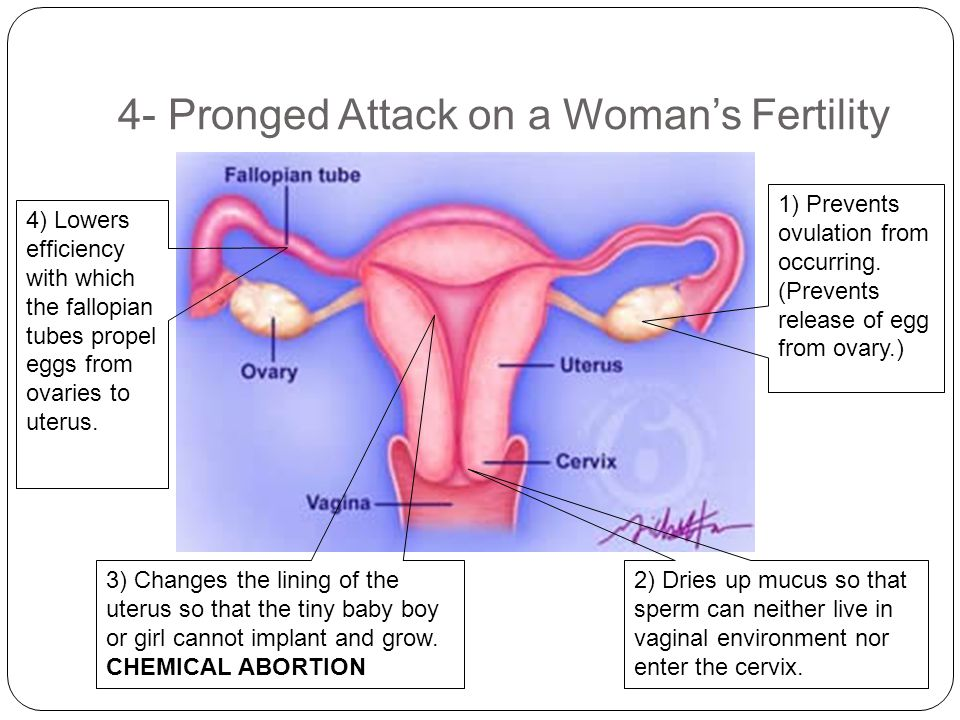 4- Pronged Attack on a Woman's Fertility 1) Prevents ovulation from occurring. (Prevents release of egg from ovary.) 2) Dries up mucus so that sperm c