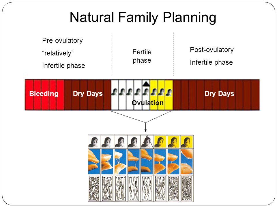 "BleedingDry Days Ovulation Pre-ovulatory ""relatively"" Infertile phase Post-ovulatory Infertile phase Fertile phase Natural Family Planning"