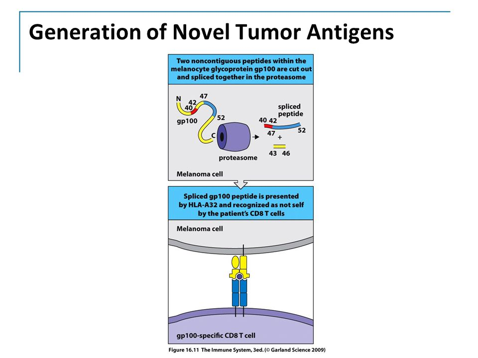 Generation of Novel Tumor Antigens