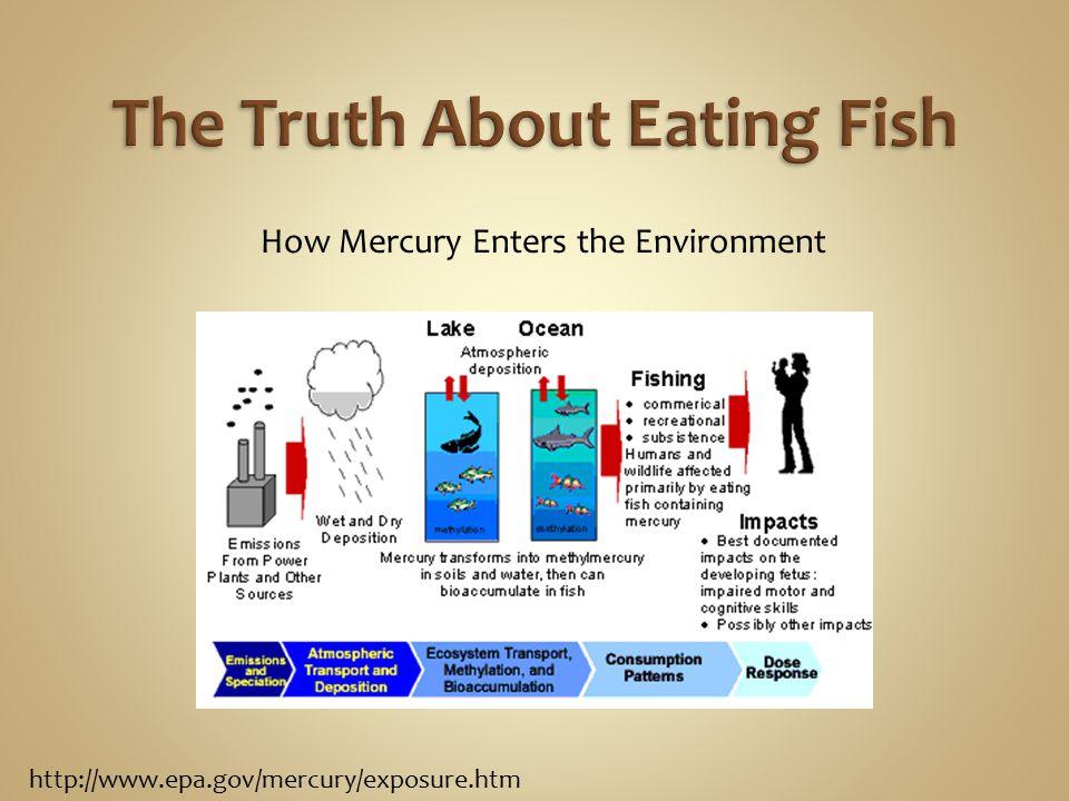 Mercury How safe is the fish in Korea.